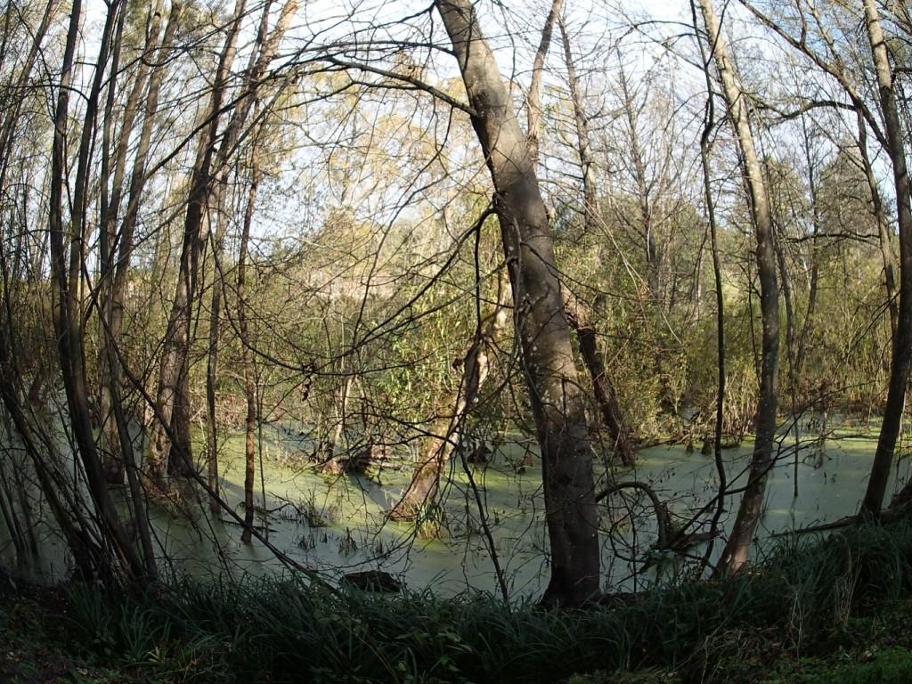 Jedno z oczek wodnych w okolicy Parczewa.
