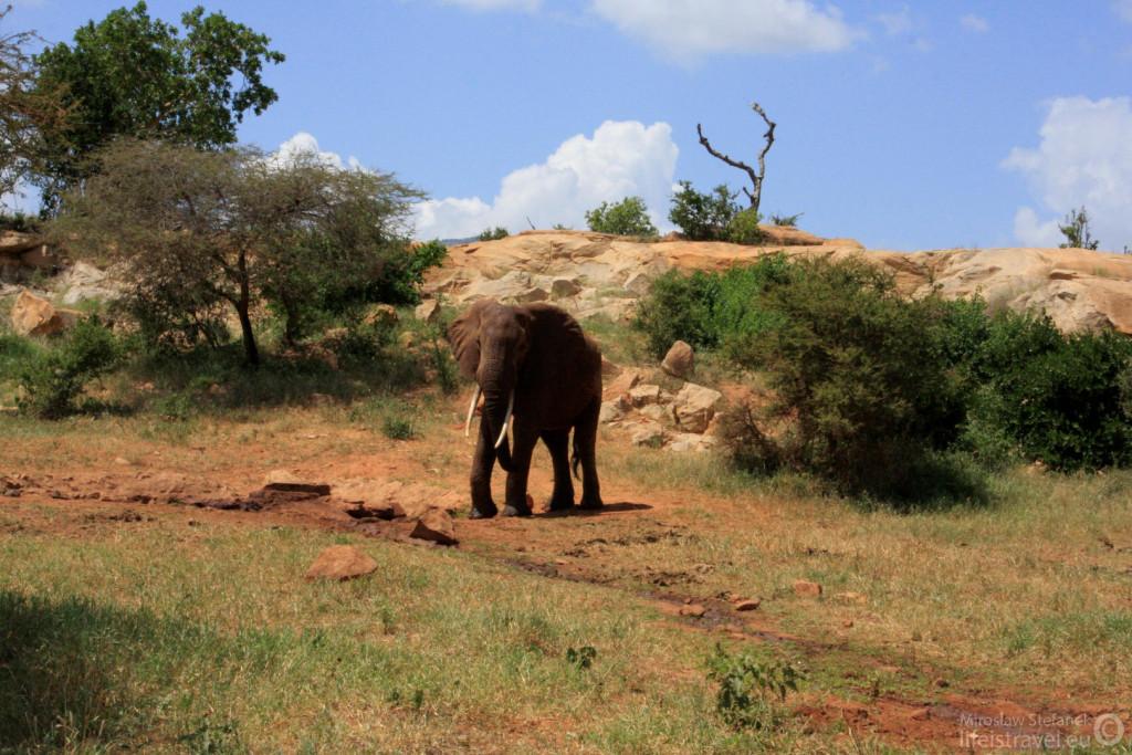 """Mój pierwszy """"ustrzelony"""" słoń."""