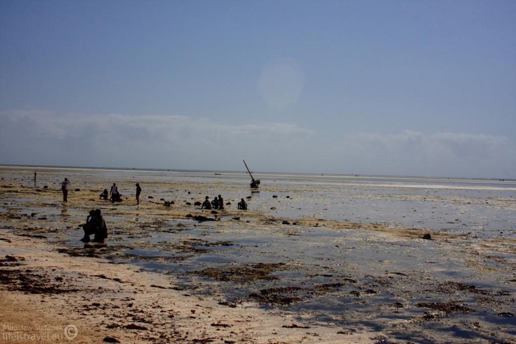 Murzyni poszukujący owoców morza.
