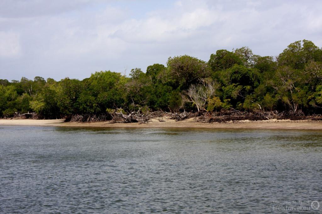 Lasy mangrowe.