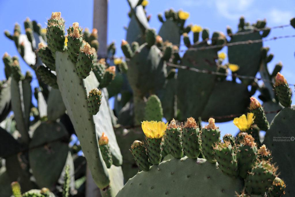 kaktus zniewolony...